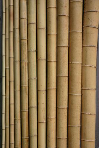5 x Bambusrohr  10-12 cm 3m Paket Bambusrohre Bambusstange Bambusstangen Bambus