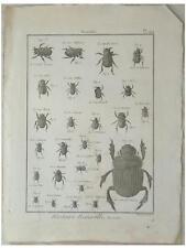 Scarabé - GRAVURE 18e siècle- ENCYCLOPEDIE DIDEROT, BENARD DIREXIT, INSECTES