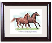 Ferdinand & Exceller Horse Racing Framed Art Famous Racehorses Rohde Collectible