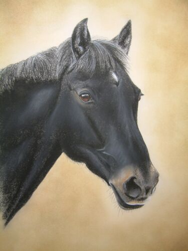 27 Images To Choose From HORSE Mounted Print By UK Artist