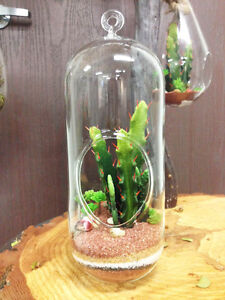 Cylindrical 12 Tall Hanging Air Plant Tilandsia Terrarium Comes