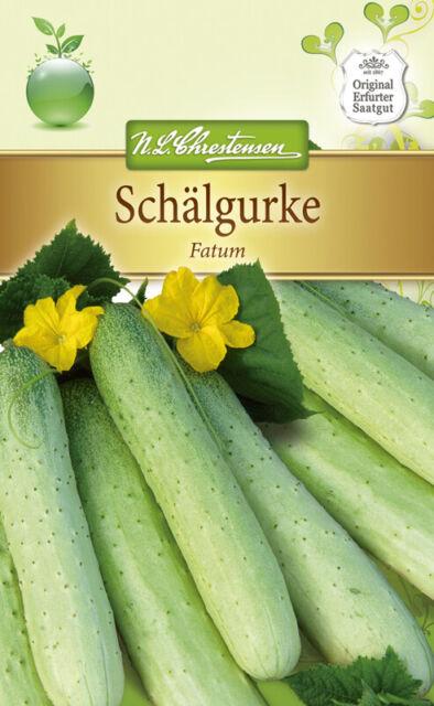 4262 Schälgurke /'Fatum/' Senfgurke Gurken Samen Schmorgurke Cucumis sativus