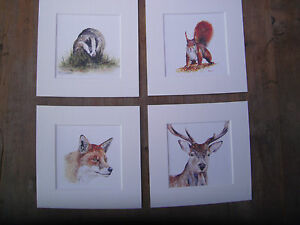 Watercolour-Stag-Fox-Badger-Squirrel-Prints-x-4-in-mounts-6-034-x-6-034