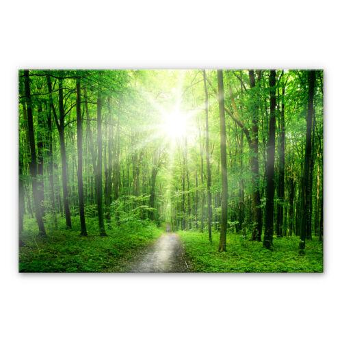 Acrylglas XXL Wandbild Sunny Forest grün BILD hohe Farbechtheit WANDDEKO