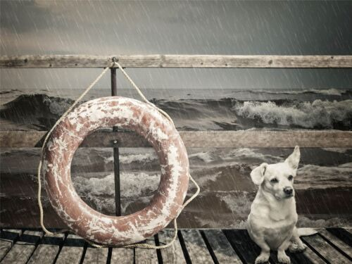 LIFEBUOY PIER BEACH SEASIDE DOG VINTAGE PHOTO ART PRINT POSTER PICTURE BMP742A