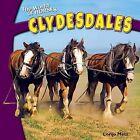 Clydesdales by Lorijo Metz (Hardback, 2012)