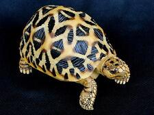 Geochelone elegans--Indian star tortoise Turtle Replica Ornament Sculpture