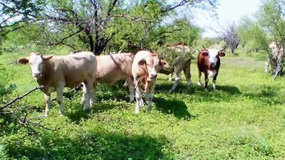 Rancho Ganadero Venta Nueva Rosita Coahuila 2,500,000 Juabue YA