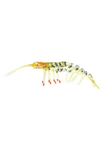 "10g w spare hook Zerek Live Shrimp Hot legs Soft Plastic 3.0/"""