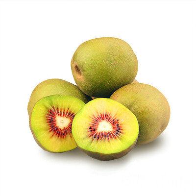 Hardy Kiwifruit Kiwi Berry Arctic Baby Grape Kiwi Actinidia Arguta Seeds 25 PCS