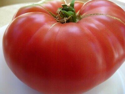 Pink Brandywine Heirloom Tomato Seeds 2020 Heirloom Seeds 75