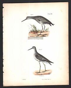 Varied-Tatler-and-Yellowlegs-Marsh-Shore-Birds-Original-1845-DeKay-H-C-Print