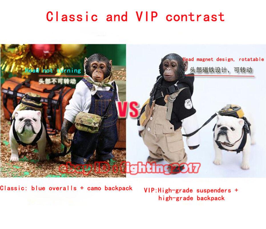 Mr.Z Animal modellololo 1 6 MRZ NO.23 Pan troglodytes &  Bulldog cifra classeeic e VIP  sconto di vendita