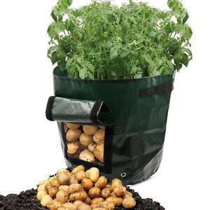 Pomme-de-Terre-Sac-Plantation-Plantes-a-Vegetaux-Selection