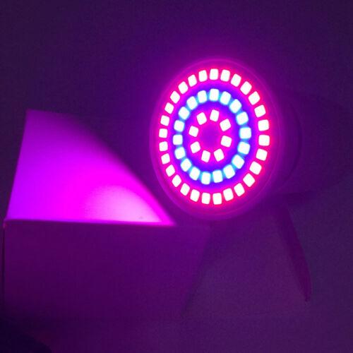 Grow ampoule Serre Fleur Plante Croissance Lampe Flexible Bureau Titulaire clip