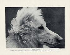 "AFGHAN HOUND ORIGINAL VINTAGE DOG PRINT PAGE 1934 ""RUPMATI OF ZEMI "" HEAD STUDY"