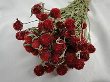 NEW NATURAL AIR DRIED RED GLOBE AMARANTH FLOWER FLORAL FOLIAGE FILLER