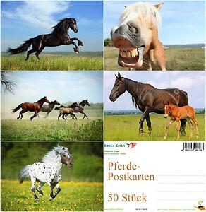 034-PFERDE-POSTKARTEN-034-Postkarten-Set-50-St-ideal-fuer-Postcrossing
