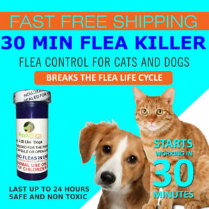 30-CAPSULES-Flea-Killer-For-CATS-and-DOGS-2-25-Lbs-12-Mg-Fast-Shipping