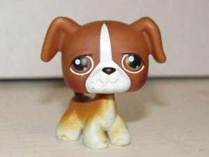 2004-Littlest-Pet-Shop-Brown-amp-White-Boxer-Puppy-Dog-25-Brown-Eyes-Hasbro-LPS