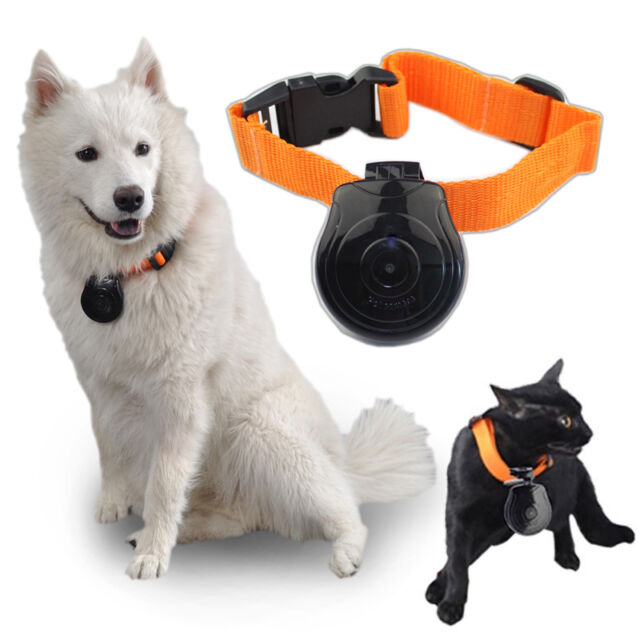 Digital Video Camera Dogs Cats Puppy Monitor Recorder Pet Collar Eye Cam Ornate