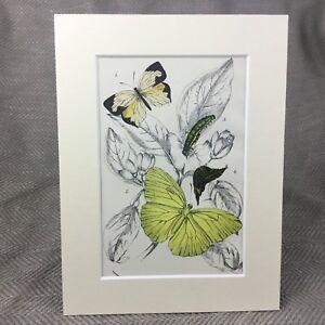 1897-Schmetterling-Gelb-Antik-Viktorianisch-Chromolithographie-Aufdruck