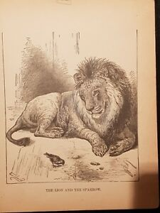 Antique-Book-Print-The-Lion-And-The-Sparrow-1894