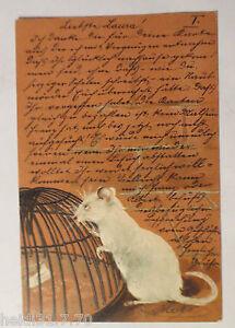 034-Ratten-Keller-Falle-034-1903-Praegekarte-12074