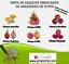 Pack-6-variedades-de-esquejes-de-PITAYAS-Pack-6-cuttings-varieties-PITAHAYAS