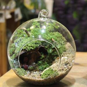 Image Vase En Verre Decor Plante
