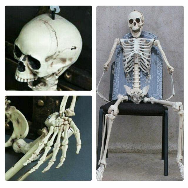 Skelett Halloween Lebensgroß 48cm Beweglich / Lehrmodell / Anatomie / Deko