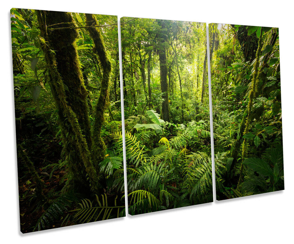 Forest Landscape Grün Trees CANVAS WALL ART TRIPLE Box Frame Print