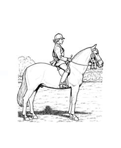 Malbuch 32 Malvorlagen Pferde Ausmalbilder Als Pdf Kinder