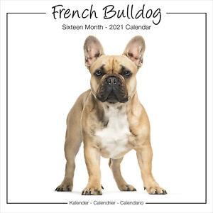Bulldog-Frances-2021-Studio-Perro-Breed-Calendario-15-OFF-Multiple-Pedidos