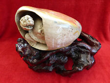 STUNNING CHINESE HAND CARVED TURTLE IN A ROCK WITH WOOD ROOT BASE - SIGNED