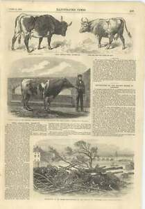 1856 Destruction Railway Bridge Tarascon Paris Agricultural Exhibition - <span itemprop='availableAtOrFrom'>Jarrow, United Kingdom</span> - If for any reason you are not satisfied with your item, do let us know. If you wish to return it, you may, within 7 days, and we will issue you with a full refund. Most purchases from busi - <span itemprop='availableAtOrFrom'>Jarrow, United Kingdom</span>