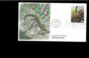 2002-FDC-Longleaf-Pine-Forest-3611e-Skink-Tallahassee-FL
