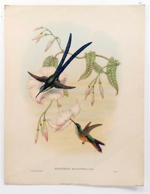 """1942 Vintage AUDUBON BIRDS #424 /""""FRINGILLIDS /& ICTERID/"""" Color Art Plate Litho"""