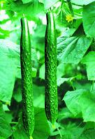1 Pack 100 Cucumber Seeds Cuke Cucumis Sativus Organic S002