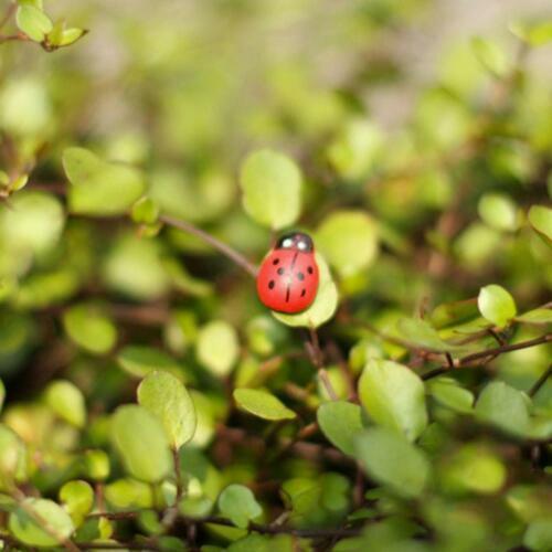 20pcs Mini Ladybug Fairy Garden Miniature DIY Micro Ornament P8J4 Landscape W2G0