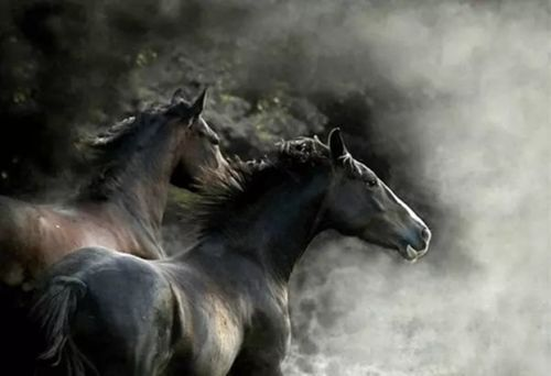 CHOP357 100/% hand-painted modern two horses decor art oil painting art on canvas