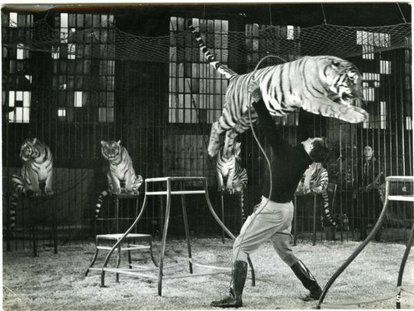 Style De Mode Cirque Le Dompteur Gerhard Riedmann Avec Un Tigre Photo Sascha Lux-prodcircus Belle En Couleur