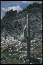 019069 Snow In Sonoran Desert A4 Photo Print