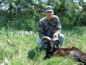 Hunt-a-Black-Hawaiian-Ram-in-beauitful-Mason-Texas-in-Texas-Hill-Country