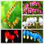 100-Pcs-Graines-Coeur-Fleurs-Bonsai-Dicentra-spectabilis-Pivoine-Plantes-de-jardin-NOUVEAU miniature 1