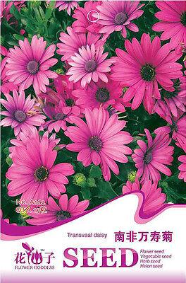 Original Package 15 Transvaal Daisy Seeds Osteospermum Flowers A162