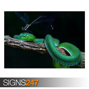 GREEN-WHITE-LIPPED-PIT-VIPER-AE916-Photo-Picture-Poster-Print-Art-A0-to-A4