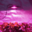 Waterproof 100W LED Grow Light Full Spectrum New Technology COB LED Grow Light,