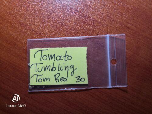 "mostrar título original Detalles acerca de  /Tomate Enano reliquia /""Tumbling Tom Rojo/"" ~ 30 semillas de calidad superior-Extra Raro"