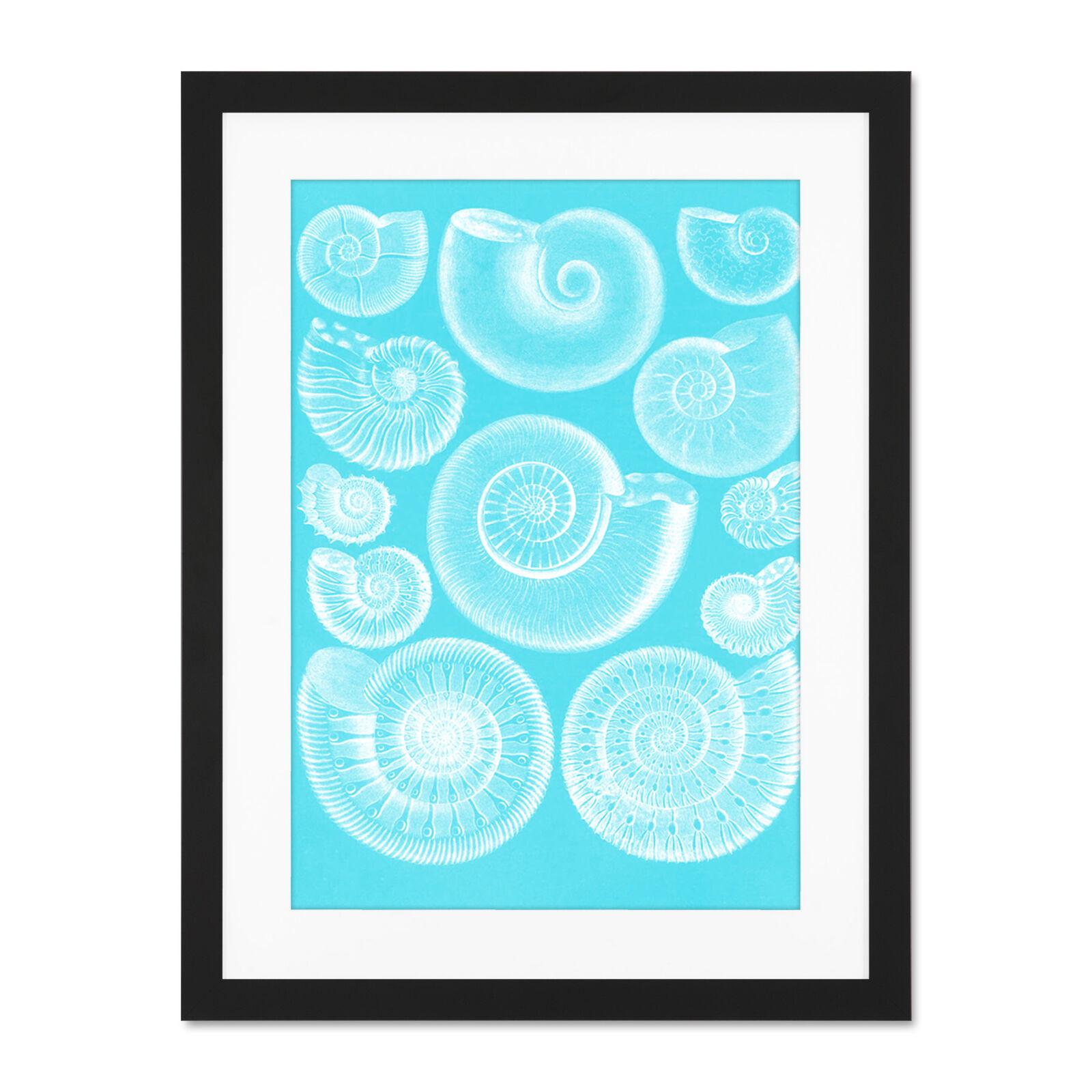 Fossil Sea Ammonites Blau Large Framed Art Print Wall Poster